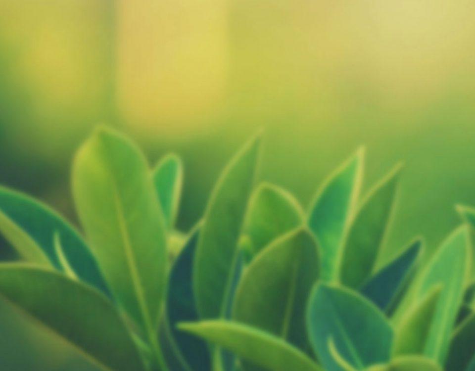 göz-iltihabına-karşı-iyi-gelen-bitkiler