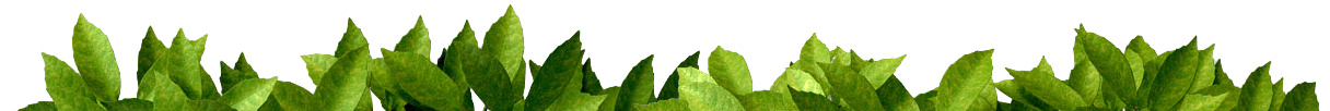 üveit-bitkisel-çözümleri