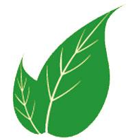 göz-iltihabına-karşı-faydalı-bitkiler-nelerdir